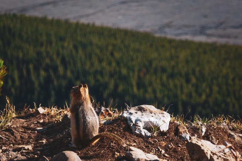 chipmunk randonnée canada ouest
