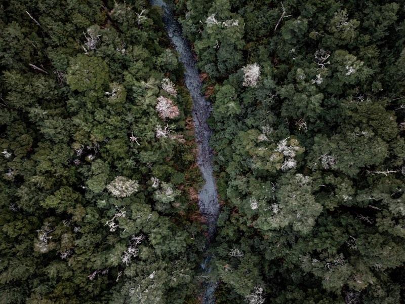 Forêt de Oxford, Nouvelle Zélande